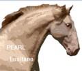 pearl lusitano